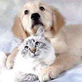 Специфічні запахи домашніх тварин