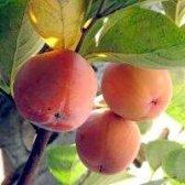 Такий смачний і сонячний джерело вітамінів