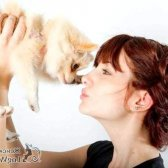 Собаки - одна з основних причин розлучення